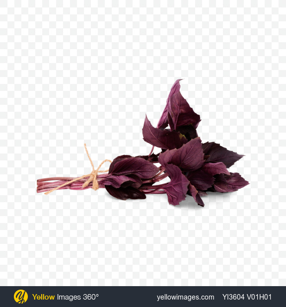 Download Bunch Of Purple Basil Leaves Transparent PNG on Yellow Images 360°