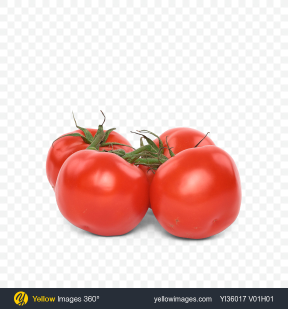 Download Tomatoes on Branch Transparent PNG on Yellow Images 360°