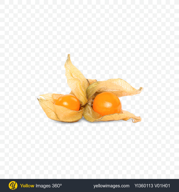 Download Physalis Berries with Husk Transparent PNG on Yellow Images 360°