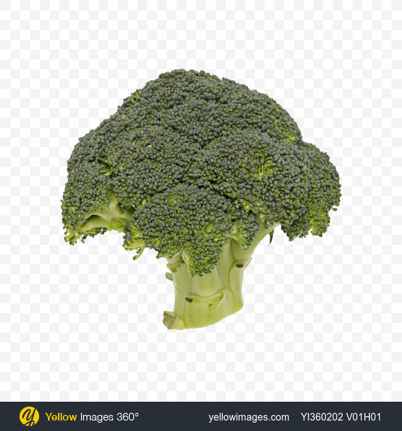 Download Broccoli Inflorescence Transparent PNG on Yellow Images 360°