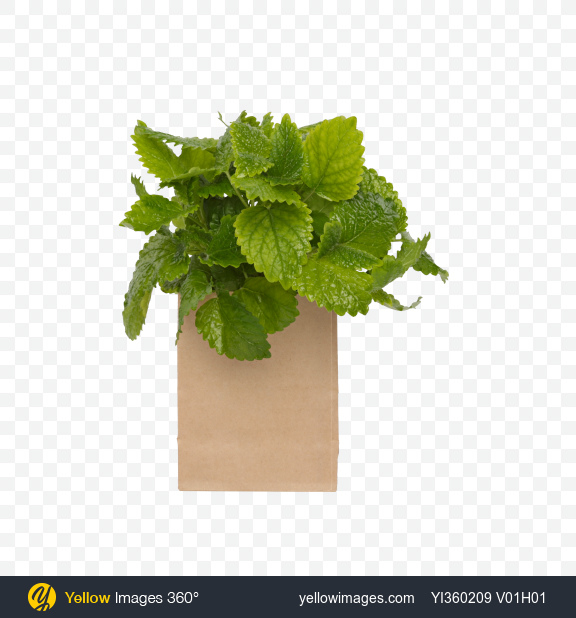 Download Melissa Leaves in Paper Bag Transparent PNG on Yellow Images 360°
