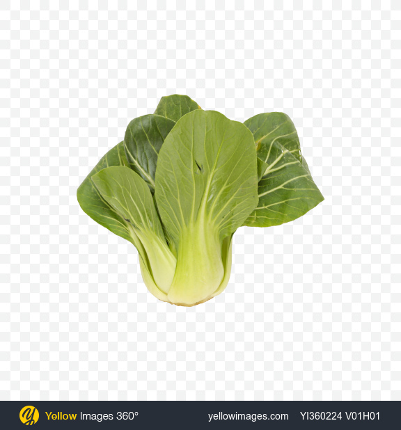 Download Bok Choy Cabbage Transparent PNG on Yellow Images 360°
