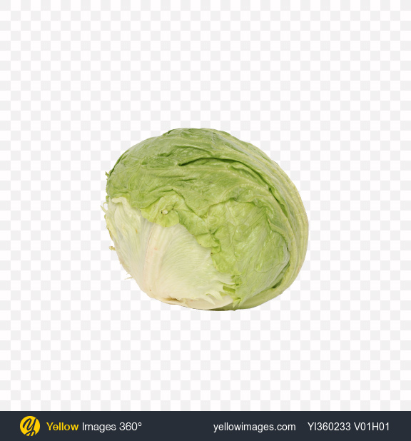 Download Iceberg Lettuce Transparent PNG on Yellow Images 360°