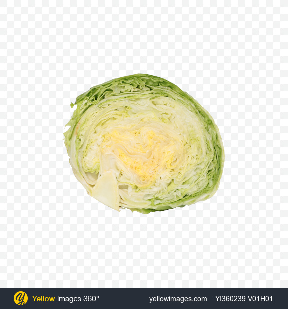 Download Half of Iceberg Lettuce Transparent PNG on Yellow Images 360°