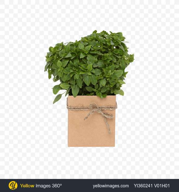Download Bunch of Green Basil In Box Transparent PNG on Yellow Images 360°
