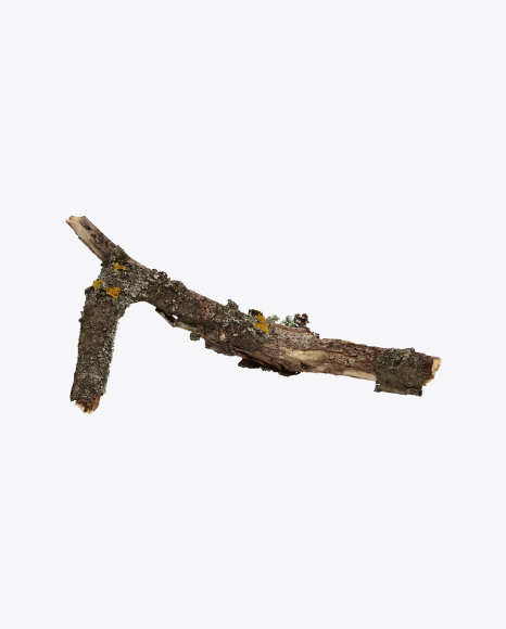 Tree Branch with Lichens