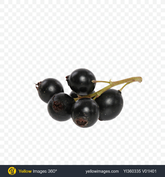 Download Black Сurrant Transparent PNG on Yellow Images 360°