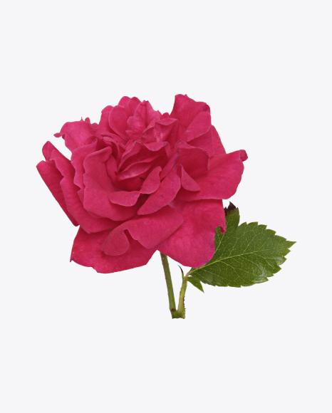 Mini Rose Flower