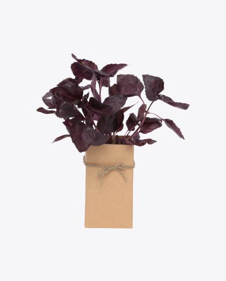 Bunch of Purple Basil In Box