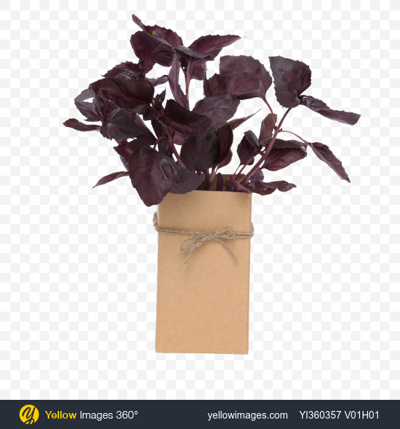 Download Bunch of Purple Basil In Box Transparent PNG on Yellow Images 360°
