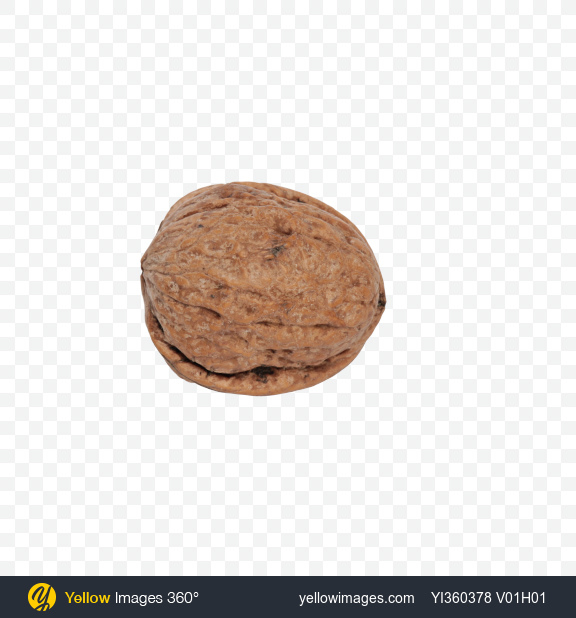 Download Walnut Shell Transparent PNG on Yellow Images 360°