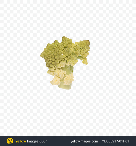 Download Romanesco Broccoli Transparent PNG on Yellow Images 360°