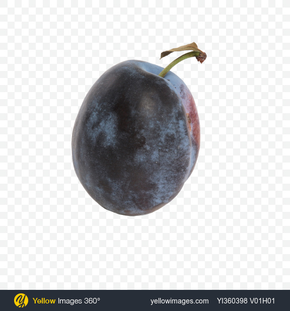 Download Blue Plum Transparent PNG on Yellow Images 360°