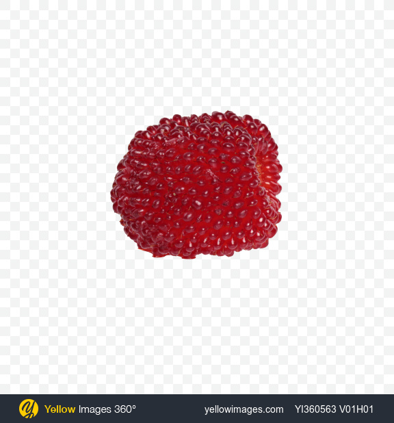 Download Tibetan Raspberry Transparent PNG on Yellow Images 360°