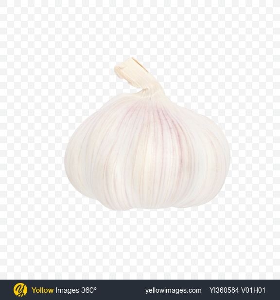 Download White Garlic Bulb Transparent PNG on PNG Images