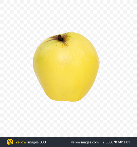 Download Quince Fruit Transparent PNG on Yellow Images 360°