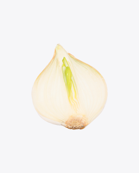 Half of White Onion Bulb
