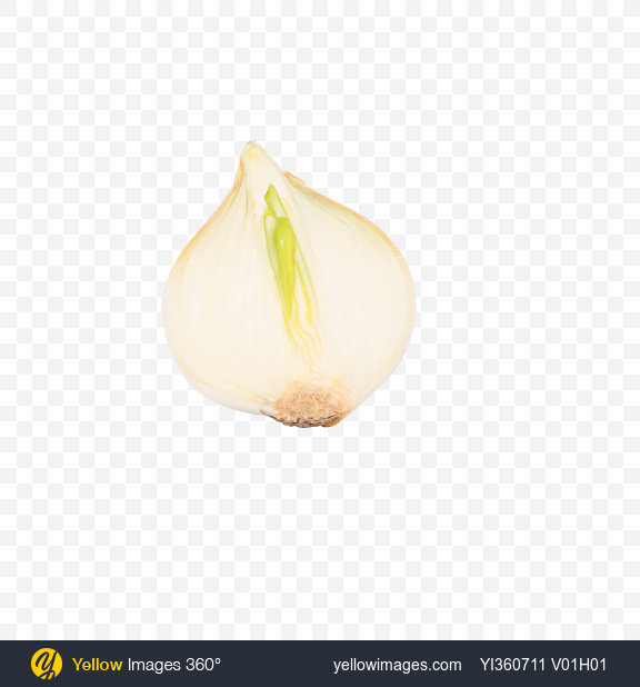 Download Half of White Onion Bulb Transparent PNG on PNG Images