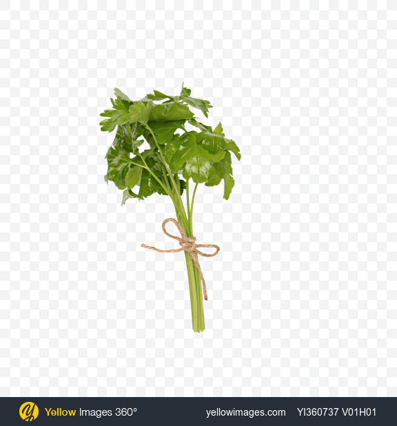Download Bunch of Flat Leaf Parsley Transparent PNG on Yellow Images 360°