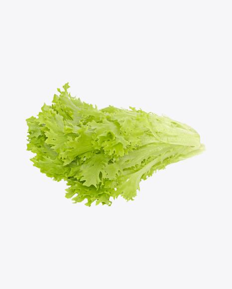 Frisée Salad Leaves
