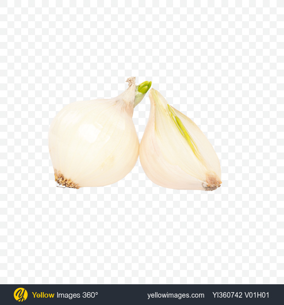 Download Onion Bulb and Half Transparent PNG on PNG Images