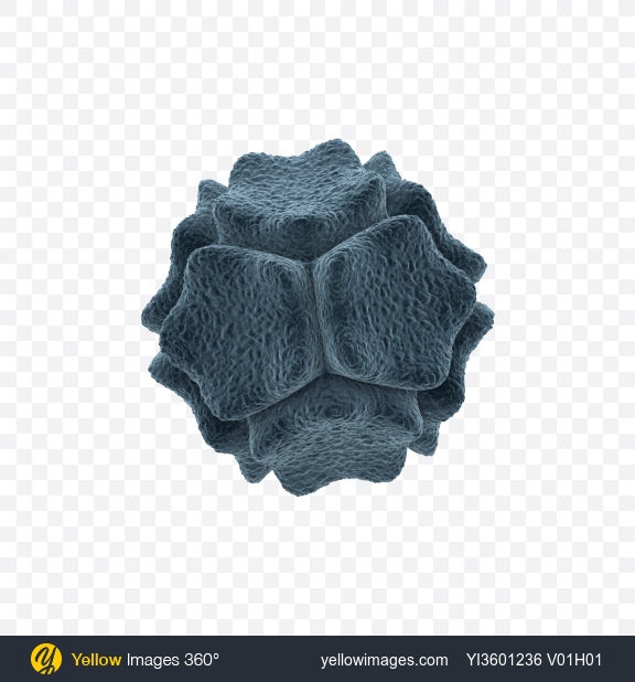 Download Bacteria Transparent PNG on Yellow Images 360°