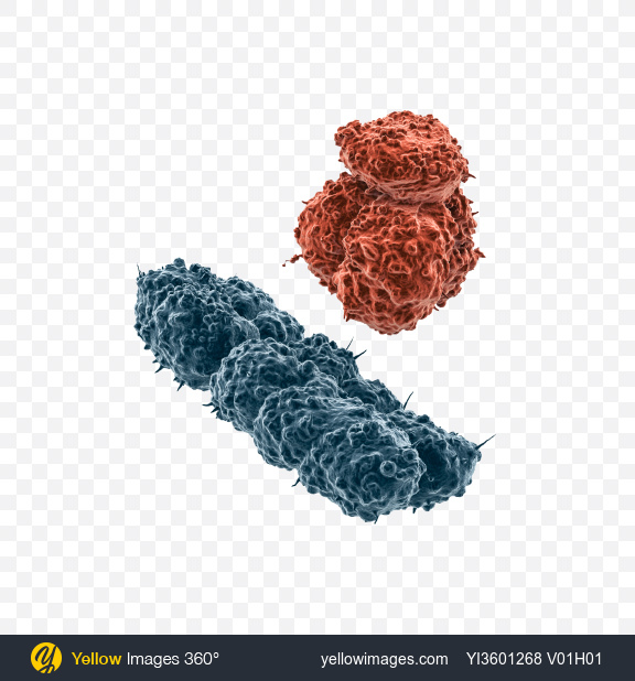 Download X and Y Chromosomes Transparent PNG on Yellow Images 360°