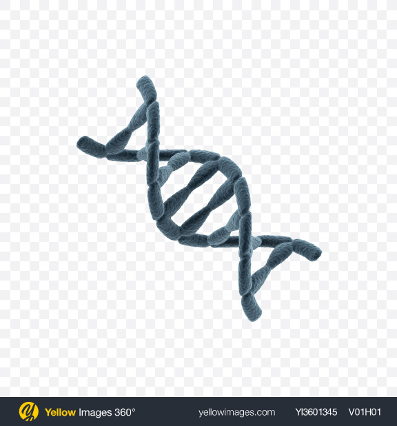 Download DNA Helix Transparent PNG on Yellow Images 360°