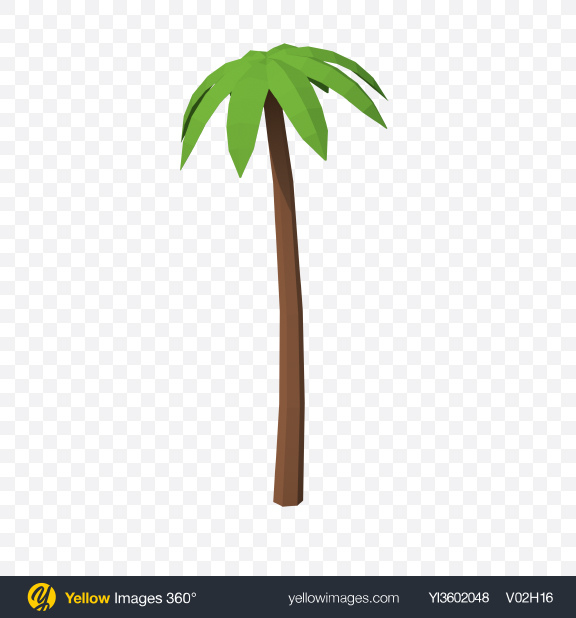 Download Low Poly Palm Tree Transparent PNG on Yellow Images 360°