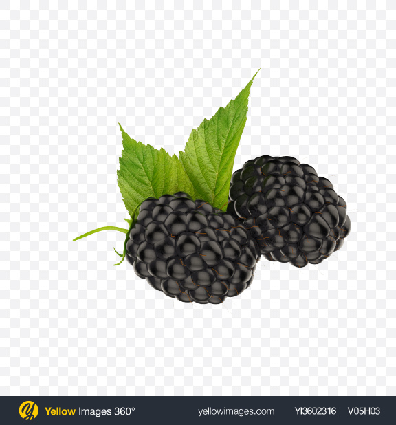 Download Blackberries Transparent PNG on Yellow Images 360°