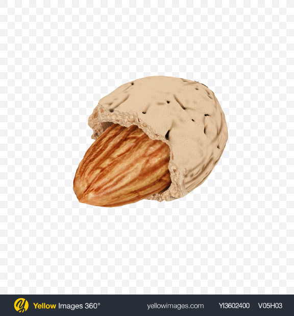 Download Almond in Shell Transparent PNG on Yellow Images 360°