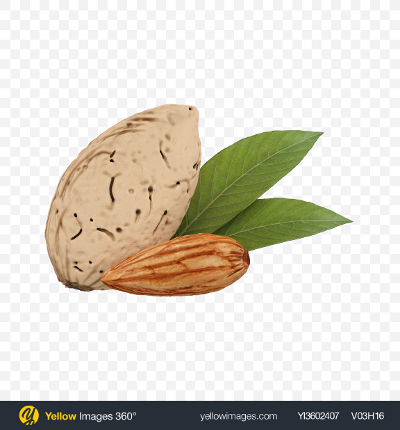 Download Almonds Transparent PNG on Yellow Images 360°