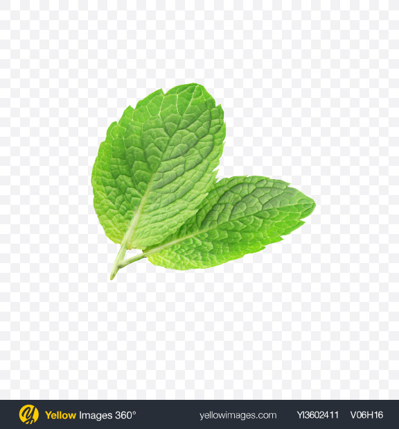 Download Mint Leaves Transparent PNG on Yellow Images 360°