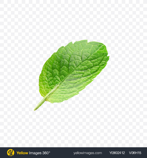 Download Mint Leaf Transparent PNG on Yellow Images 360°