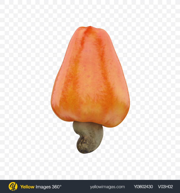 Download Cashew Fruit Transparent PNG on Yellow Images 360°