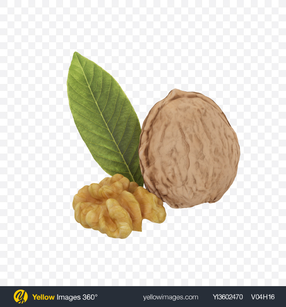 Download Walnuts Transparent PNG on Yellow Images 360°