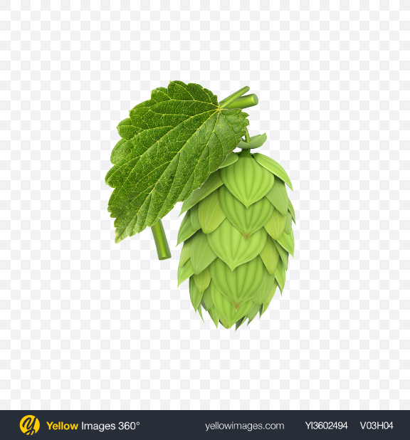 Download Hop Transparent PNG on Yellow Images 360°
