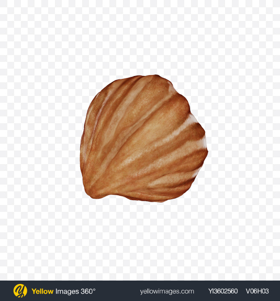 Download Hazelnut Transparent PNG on Yellow Images 360°