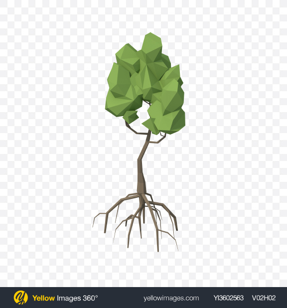 Download Low Poly Mangrove Tree Transparent PNG on Yellow Images 360°