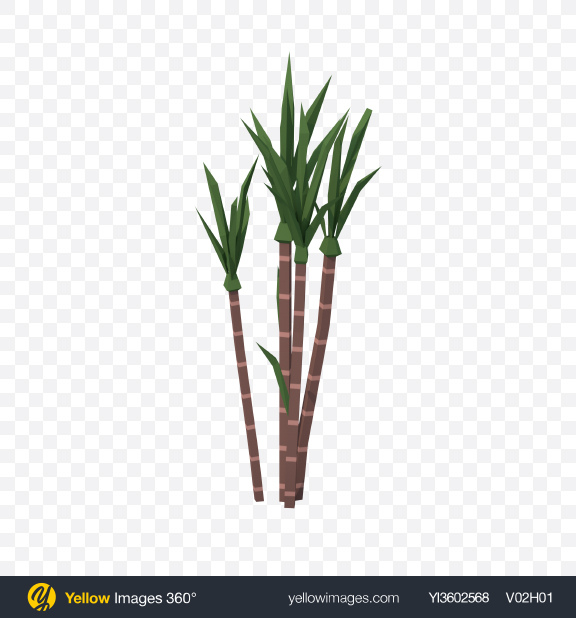 Download Low Poly Sugarcane Transparent PNG on Yellow Images 360°