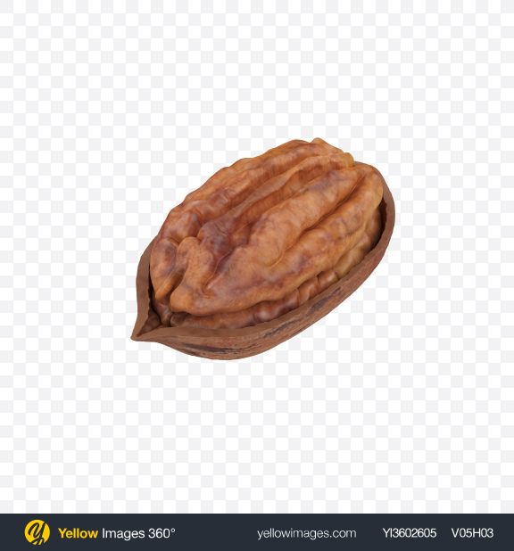 Download Pecan in Shell Transparent PNG on Yellow Images 360°