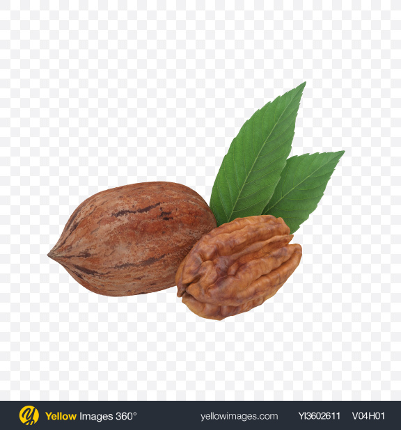 Download Pecans Transparent PNG on Yellow Images 360°
