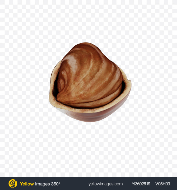 Download Hazelnut in Shell Transparent PNG on Yellow Images 360°