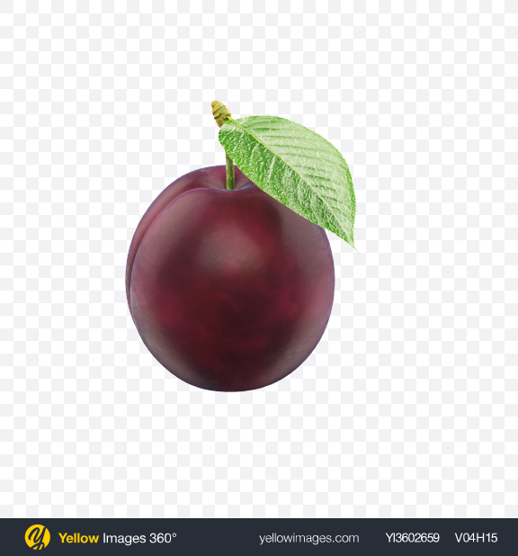 Download Plum Transparent PNG on Yellow Images 360°