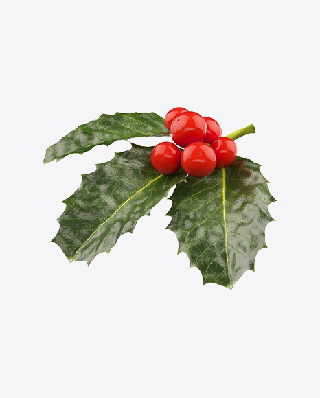 Holly Berries with Leaves