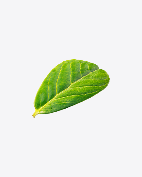 Lingonberry Leaf