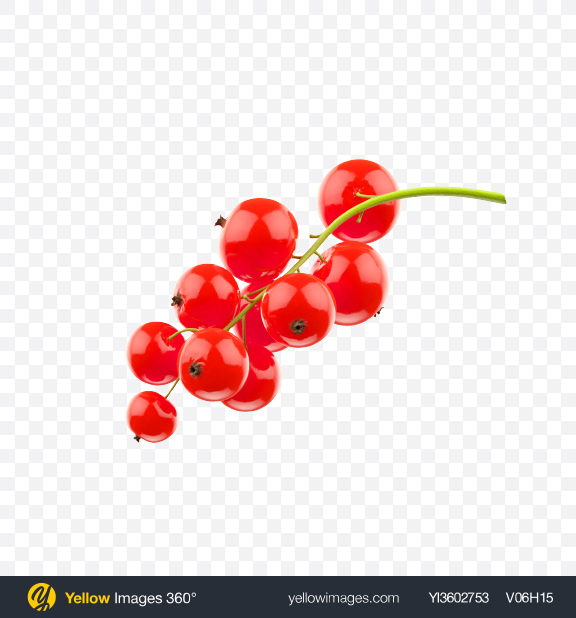 Download Branch of Red Currant Transparent PNG on Yellow Images 360°
