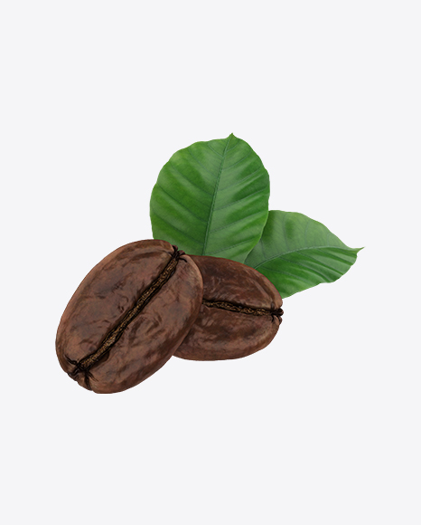 Coffee Beans & Leaves