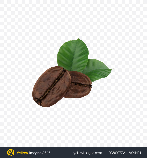 Download Coffee Beans & Leaves Transparent PNG on Yellow Images 360°