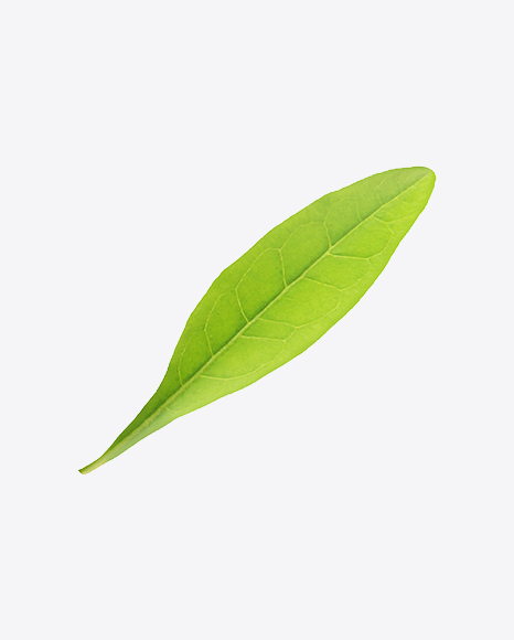 Goji Berry Leaf